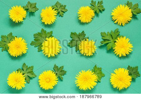 Colorful floral pattern of yellow dandelions and leaves of geranium on green background. Festive spring background. Flat layout top view