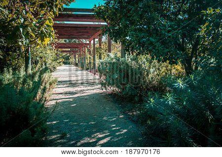 Quiet Passage In St. Kilda Botanical Gardens On Bright Sunny Day, Melbourne Australia.