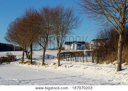 Dry Trees On A Snow Field With Fences And An Urban Area Building On The Background.