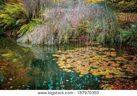 Water Lily Leaves And Bare Tree In A Small Pond In Autumn, Covered With Red Foliage.