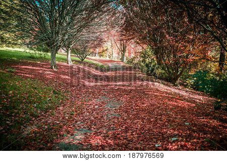 Quiet Trail Covered In Red Foliage Among Bare Trees In Autumn. National Rhododendron Gardens, Melbou