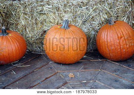 Pumpkins on display for purchase for halloween day.