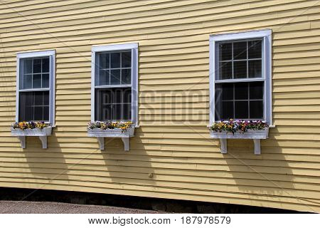 Outside wall of home with three windows and flowerboxes filled with bright and cheerful faces of pansies.