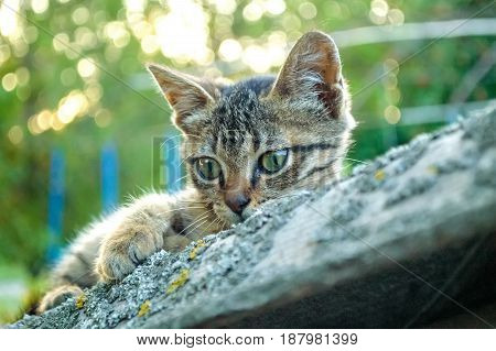 Close up young cute kitten with green trees in background