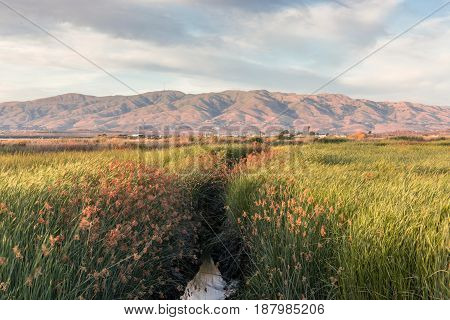 Alviso Wetlands and Diablo Mountain Range. Alviso Marina County Park, Santa Clara County, California, USA.