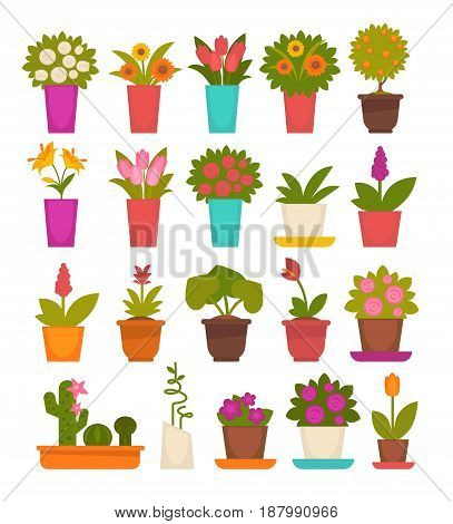 Set of vector illustrations of different flowers in pots and vases isolated on white.