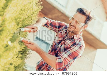 Hedge trimming, man works in a garden.