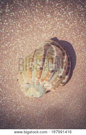 Sea Shell Macro Retro