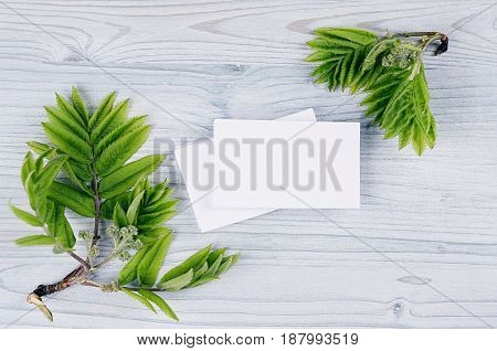Corporate identity template stationery with green foliage on soft light blue wooden board. Mock up for branding graphic designers presentations and portfolios.