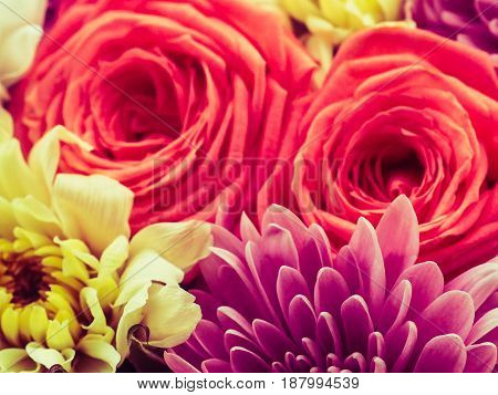 Bright and beautiful colors of roses flowers.