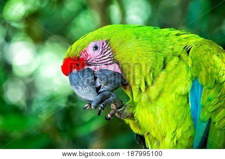Green Ara Parrot Outdoor