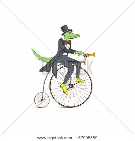 Sketch of a crocodile in a dress coat on a retro bicycle on white background.