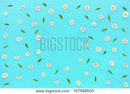 Daisy Flowers Bellis perennis and green leaves on turquoise blue background with copy space. Flat lay and top view.