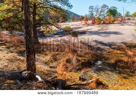 Landscape with trees dry grass and stone ground in the Stone Mountain Park in sunny autumn day Georgia USA