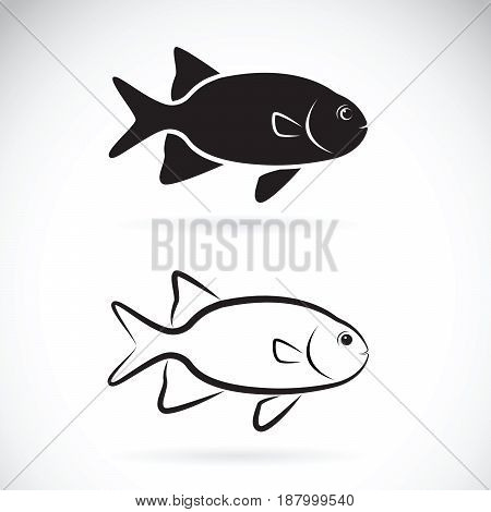Vector of two fish on white background. Aquatic animals.