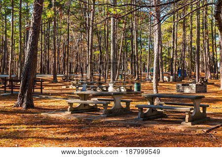 Landscape with pine trees and benches of Studdard Picnic Area in the Stone Mountain Park in sunny autumn day Georgia USA