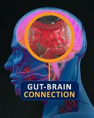 Gut-brain connection or gut brain axis. Concept art showing the health connection from the gut to the brain. 3d illustration. poster