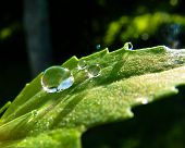 water droplets on a green leaf in morning sun poster