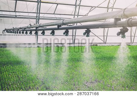 Machine For Spraying Water In The Greenhouse, Spraying Water For Plants In Greenhouses, Growing Orga