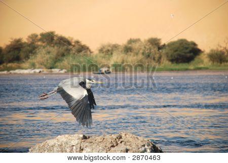 Blue Heron On The Nile Egypt Part 1 221