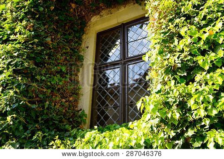 Window On Wall Overgrown With Ivy