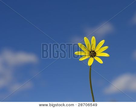 Yellow flower against a blue sky