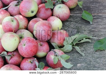Fresh Red Apples. Harvest Of Apples. Pink Apples On A Wooden Background. Leaves Of Apple. Freshly Ha