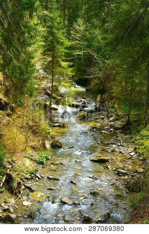 Mountain River In Spring Forest. Evergreen Conifer Forest In Highland
