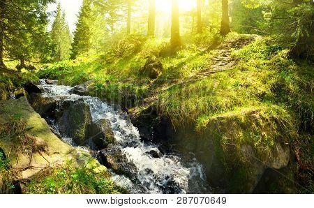 Spring Brook In Sunny Conifer Forest In Highland