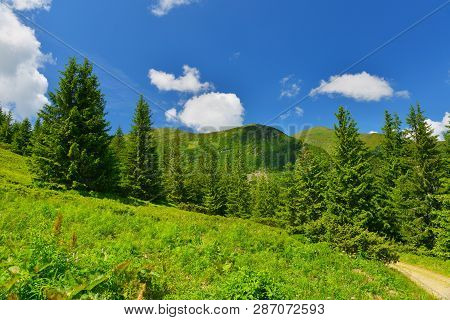 Green Meadow In Summer Mountains. Conifer Mountain Forest In High Summer