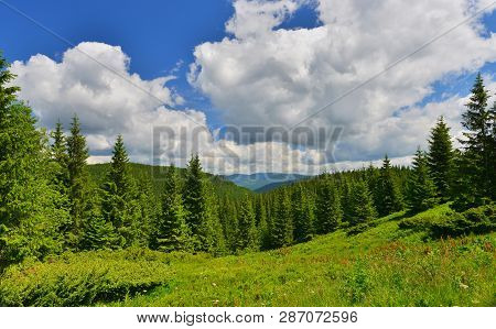Forest. Conifer Forest And Alpine Meadow In Highland