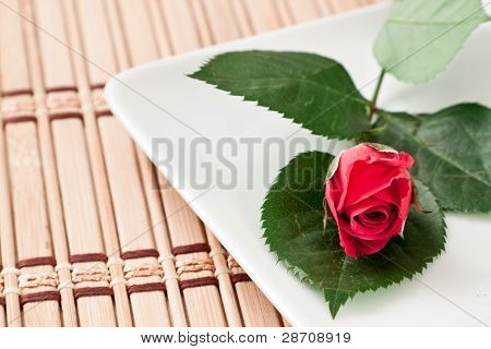 Rosa roja pequeña