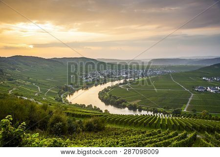 Famous River Moselle Loop In Trittenheim, Germany
