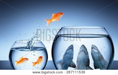Shark Trap - Business Risk Concept - Goldfish Jumping In Shark Tank