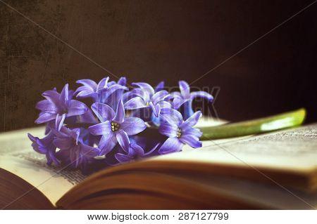 Flower And Book On Dark Grunge Background