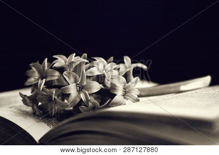 Sympathy Card With Flower And Open Book