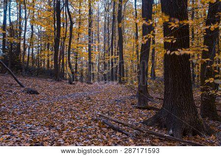 Autumn, Fall Scene. Beautiful Autumnal Park. Beauty Nature Scene. Autumn Landscape.