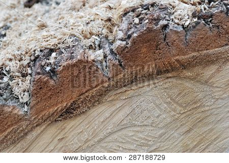 The Surface Of A Sawn Tree Trunk With A Beautiful Expressive Texture