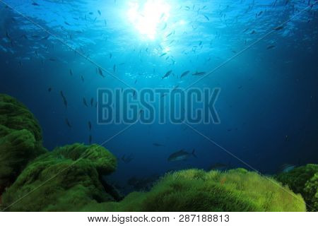 Green Seaweed, blue water and fish