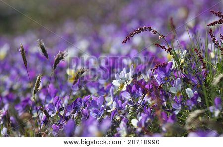 Lila blomma säng