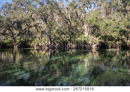 Reflection Of Trees In The Water At Blue Springs State Park In Florida.