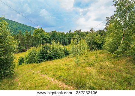 Summer Scenery On A Cloudy Day In Mountains. Meadow On Hillside Near The Forest. Mixed Beech, Spruce