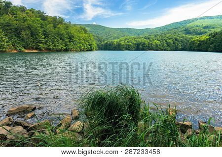 Beautiful Summer Scenery Near The Mountain Lake. Beech Forest And Rocks Among Tall Grass On The Shor