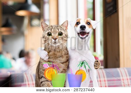 Dog Jack Russell Terrier And Cat Hugging Each Other In The Cafe