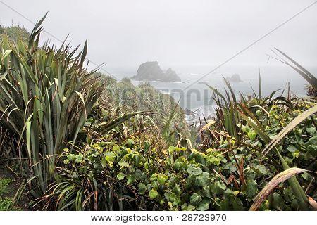 Coast Line Near Cape Foulwind In The Fog