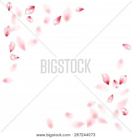 Pink Sakura Flower Flying Petals Isolated On White. Fresh Floral Background. Japanese Sakura Petals