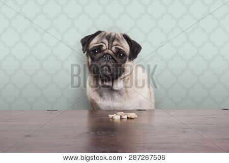 Cute Pitiful Pug Puppy Dog On A No Carbs Diet Sitting At Wooden Table With Snacks In Front, On Paste