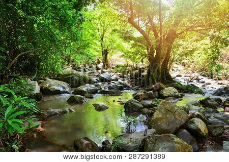 River Stream Landscape Waterfall Green Forest Nature Jungle On The Mountain With Rocks Stones And Gr