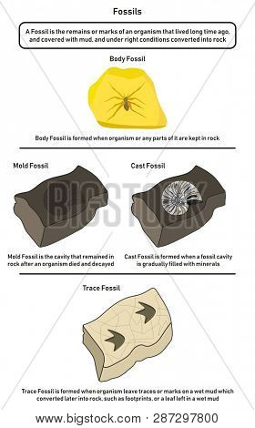 Fossils infographic diagram including body mold cast and trace fossils showing how organism lived long time ago form them in nature from mud to rock and differences for geology science education