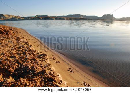 Dog Prints On Beach